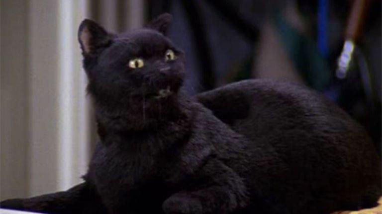 Salem le chat de Sabrina